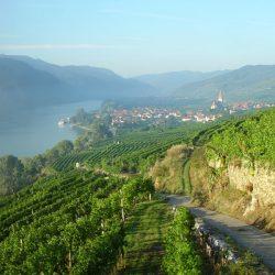 Von der Riede Achleiten in Richtung Westen © Gartenhotel & Weingut Pfeffel