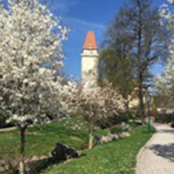 Frühling Stadtgraben Region Freistadt @ Johanna Stelzer