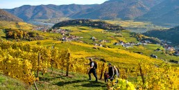 Weinwandern zum Weinspitz bei Genuss Reisen Österreich