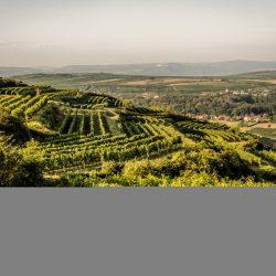 Weingartenpanorama Gaisberg @ Robert Herbst/POV